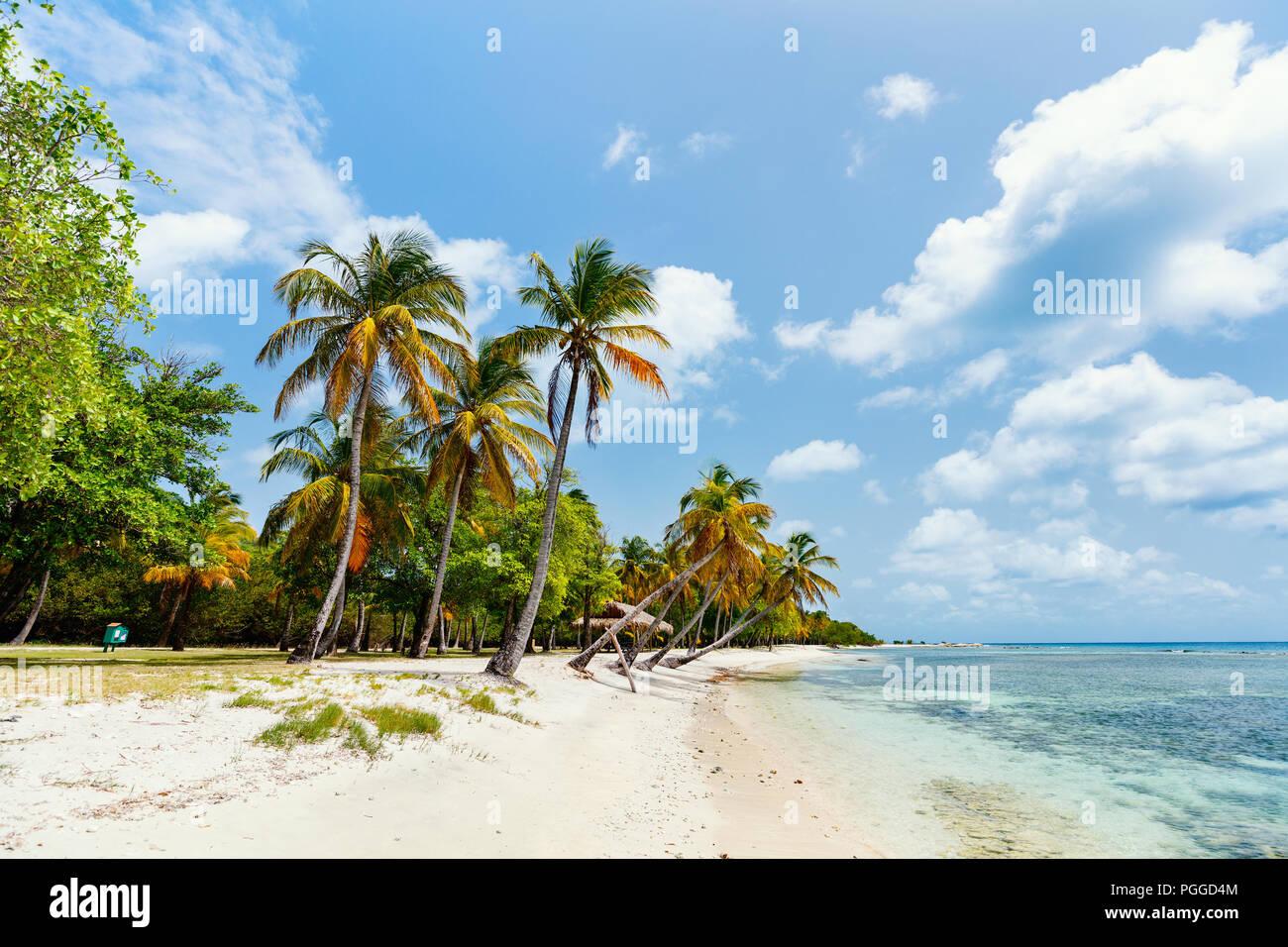 Idyllischen tropischen Strand mit weissem Sand, Palmen und das türkisblaue Karibische Meer Wasser auf Mustique Island St. Vincent und die Grenadinen Stockbild