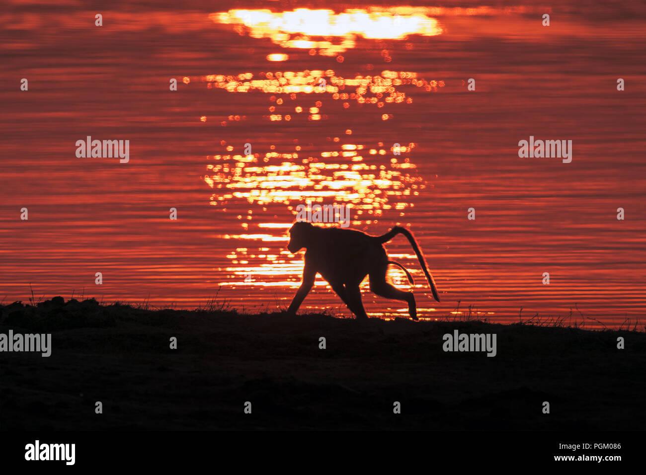L'aube de l'Homme Stockbild