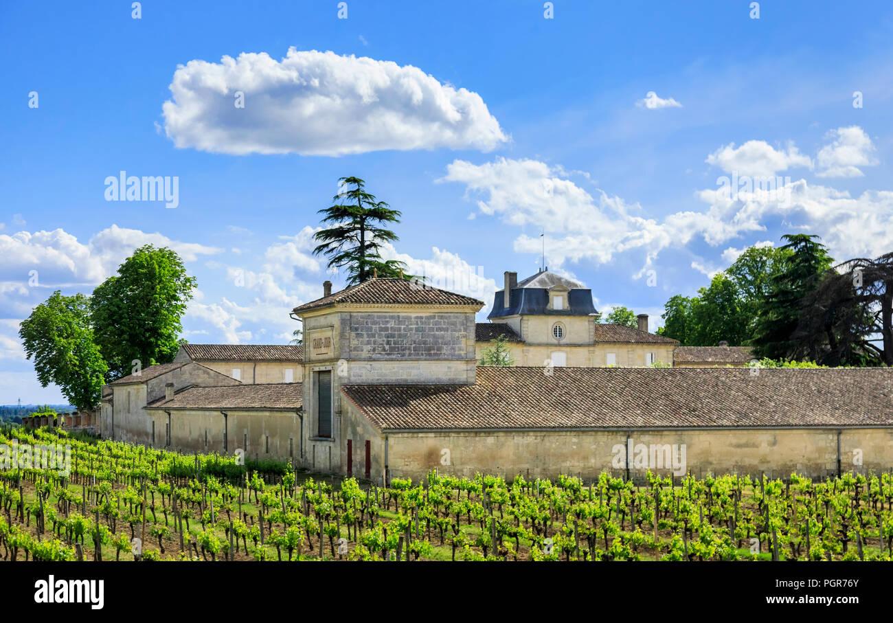 Weinberg mit gesunden und Frost - beschädigte Reben an Prignac-et-Marcamps, Gironde Abteilung, Nouvelle-Aquitaine im Südwesten von Frankreich. Stockbild