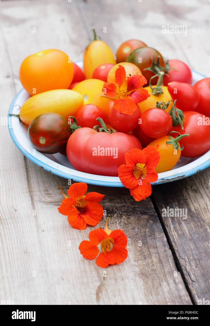 Solanum Lycopersicum. Frisch geernteten Sorten homegrown heirloom Tomaten mit essbaren Blüten, Kapuzinerkresse und Rosmarin in Emaille Schüssel Stockbild