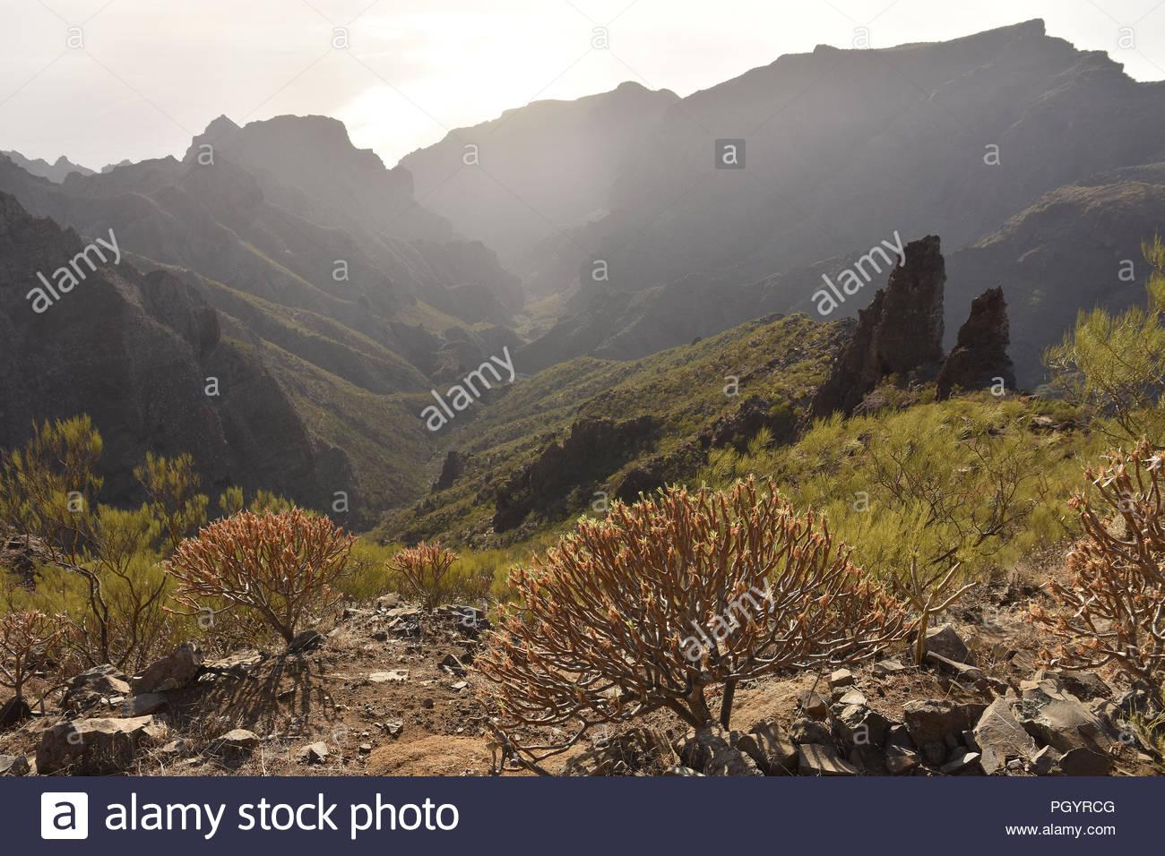 Den Berg Macizo de Teno-ariden Vulkanlandschaft mit sukkulenten Pflanzen, Teno-gebirge im Nordwesten von Teneriffa Kanarische Inseln Spanien. Stockbild