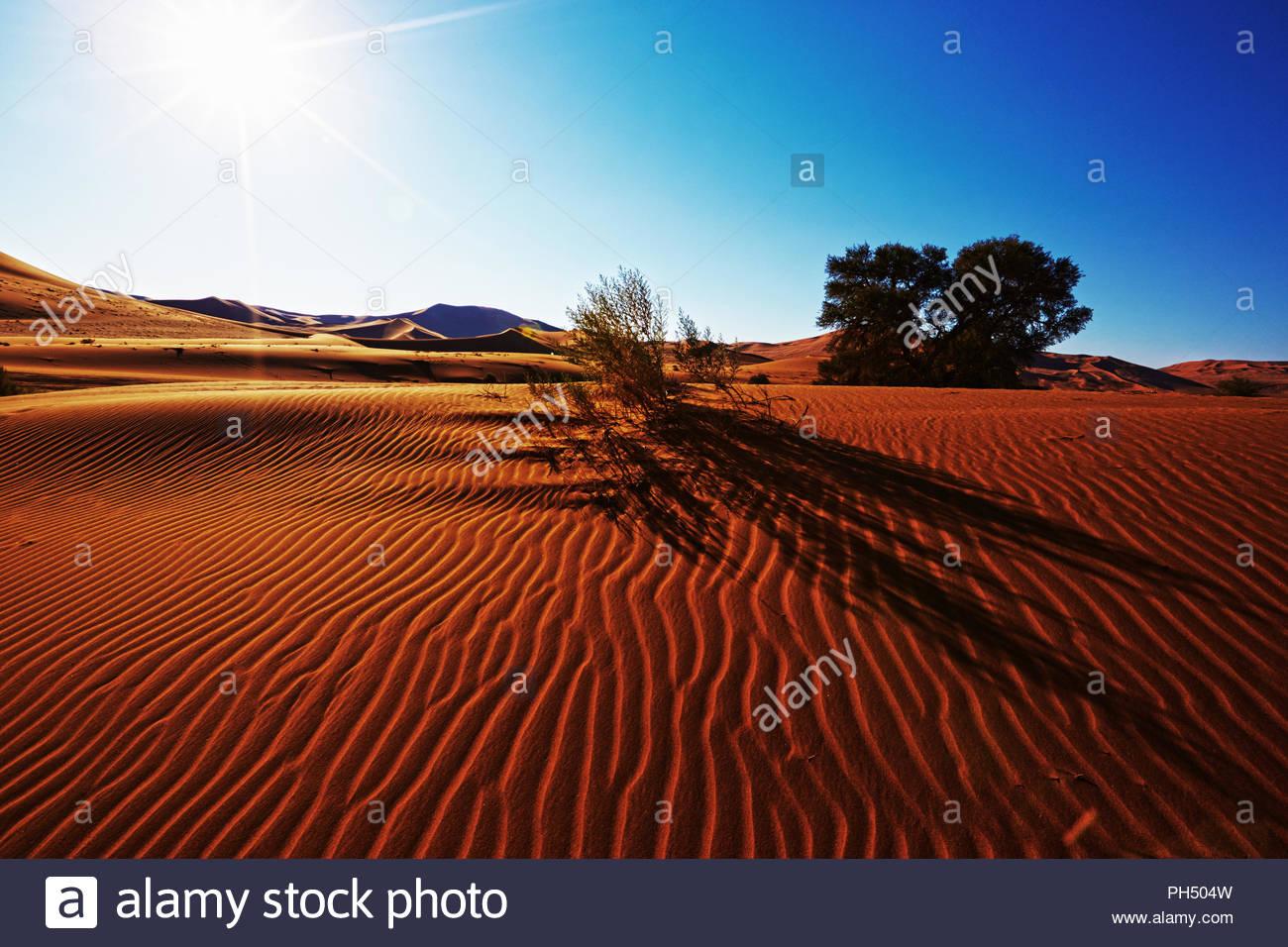 Wüstenlandschaft in Namibia Stockbild
