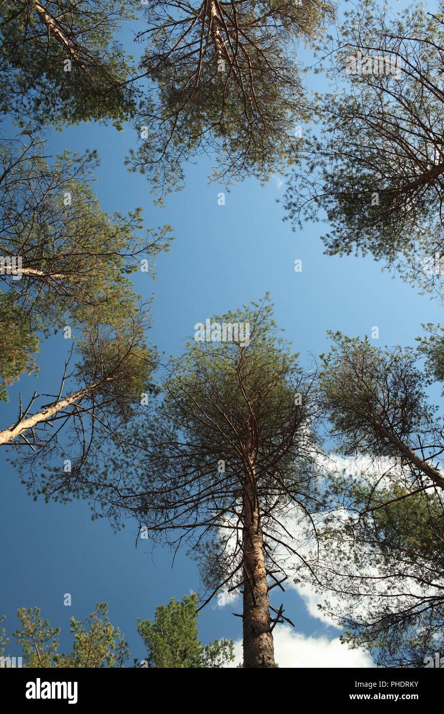 Treetops im blauen Himmel Stockbild