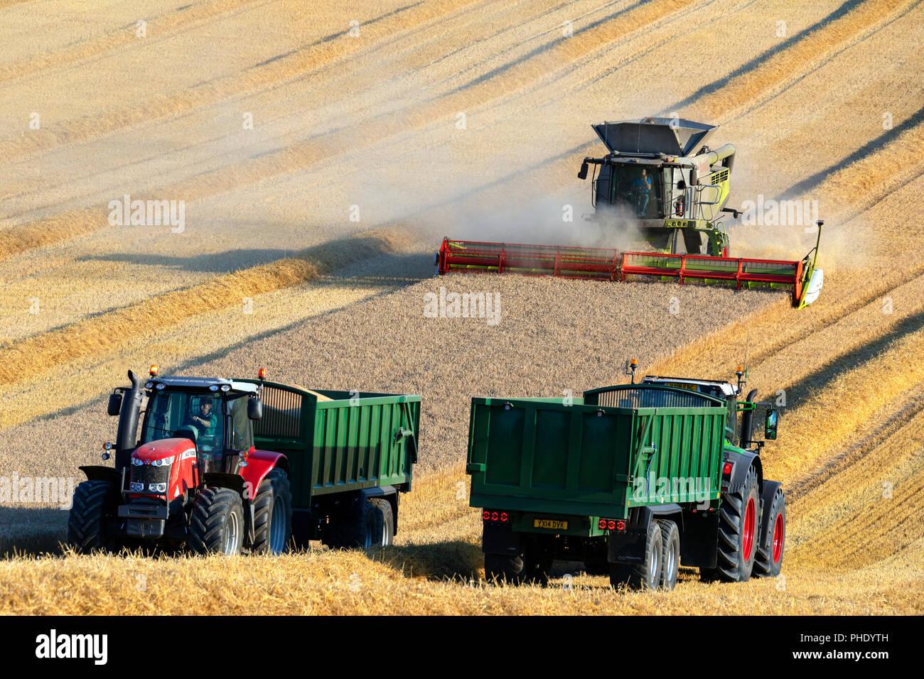 Mähdrescher Schneiden eine Ernte von Weizen auf Ackerland in North Yorkshire im Vereinigten Königreich Stockfoto