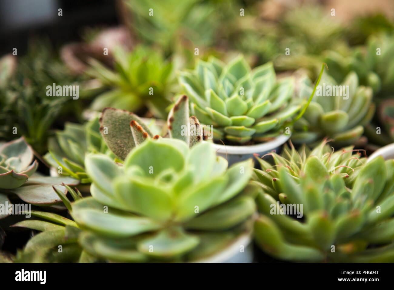 Viele Kleine Topfpflanzen Saftige Home Pflanzen Verschiedene Kleine