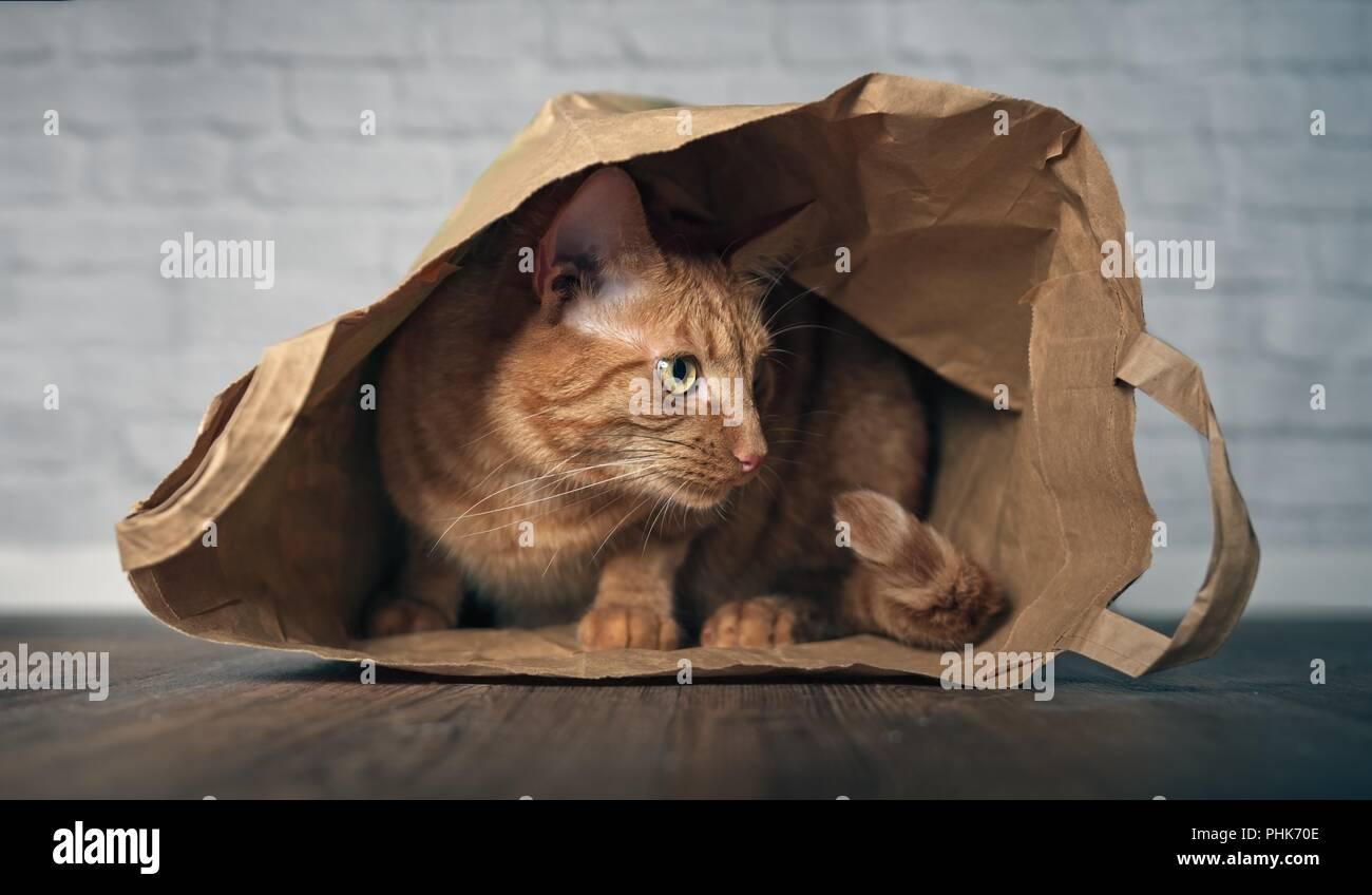 Ingwer süße Katze sitzt in einer Papiertüte und seitwärts schauen neugierig. Stockbild