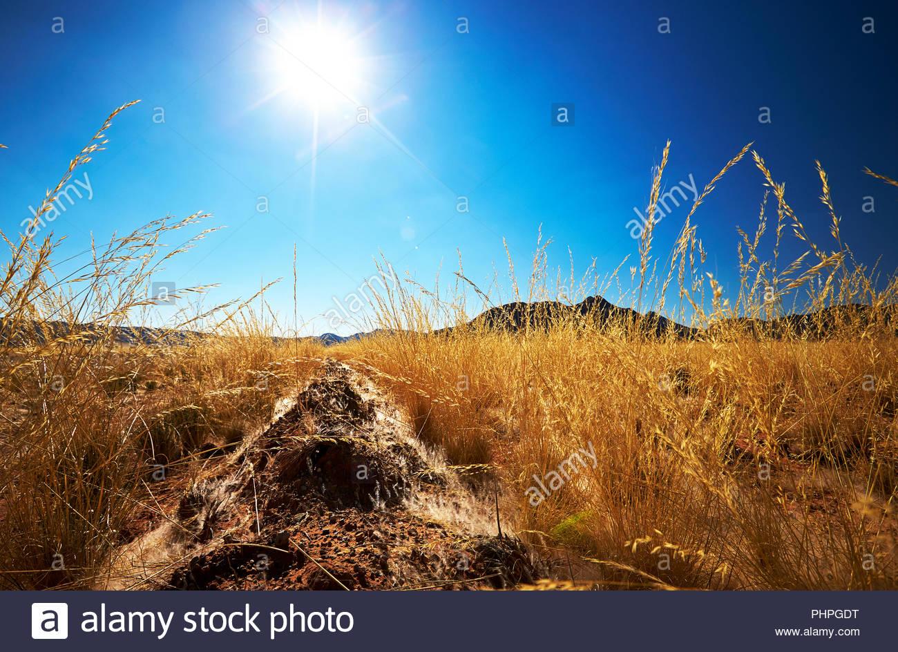 Sonne über Feld Stockbild