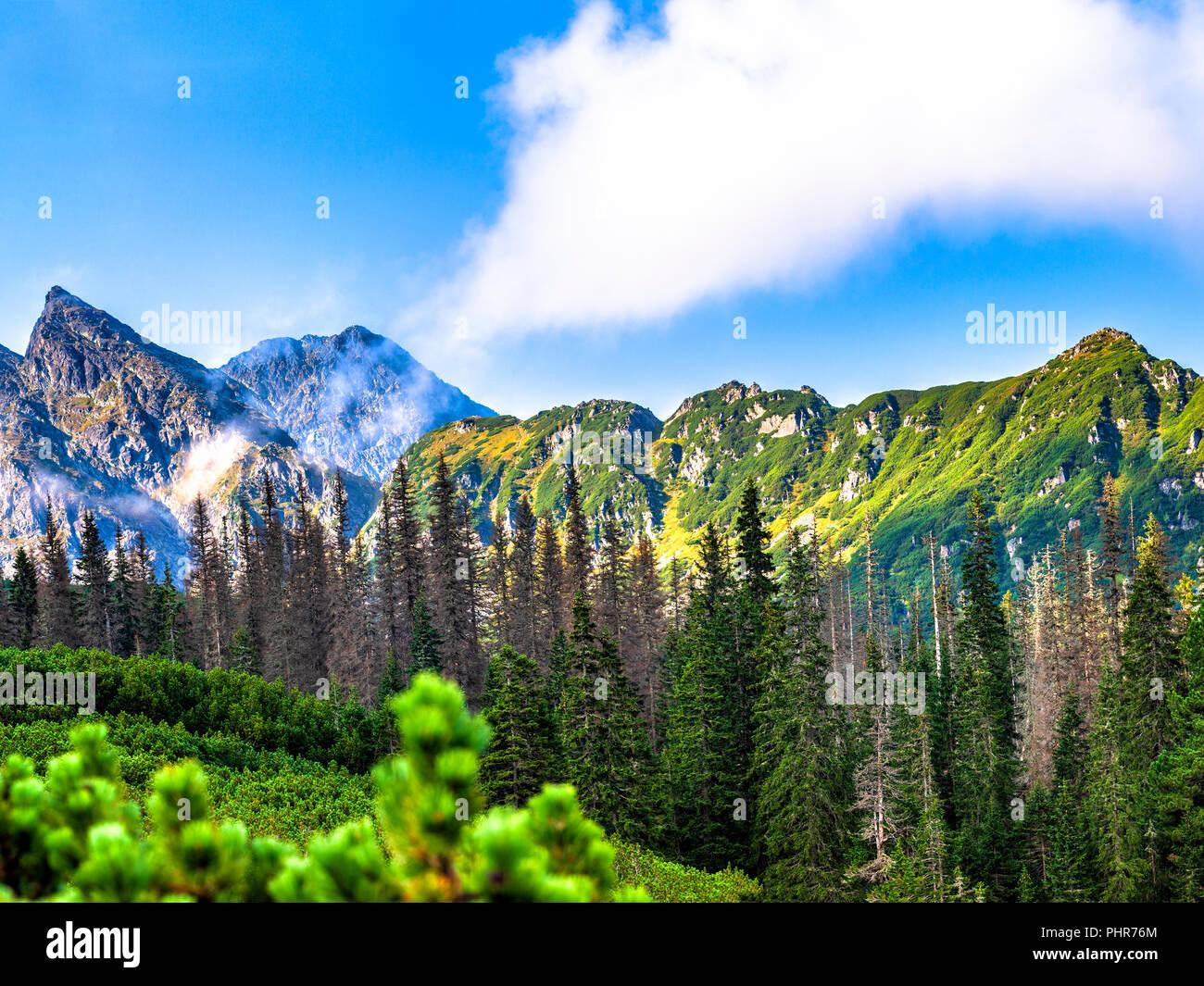 Polnische Tatra Sommer Landschaft mit blauem Himmel und weißen Wolken. Stockfoto