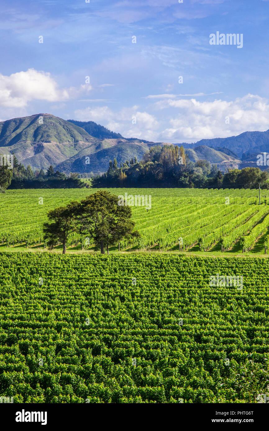 Fläche (Hektar) der Weinberge in der Region Marlborough auf South Island, Neuseeland. Stockfoto