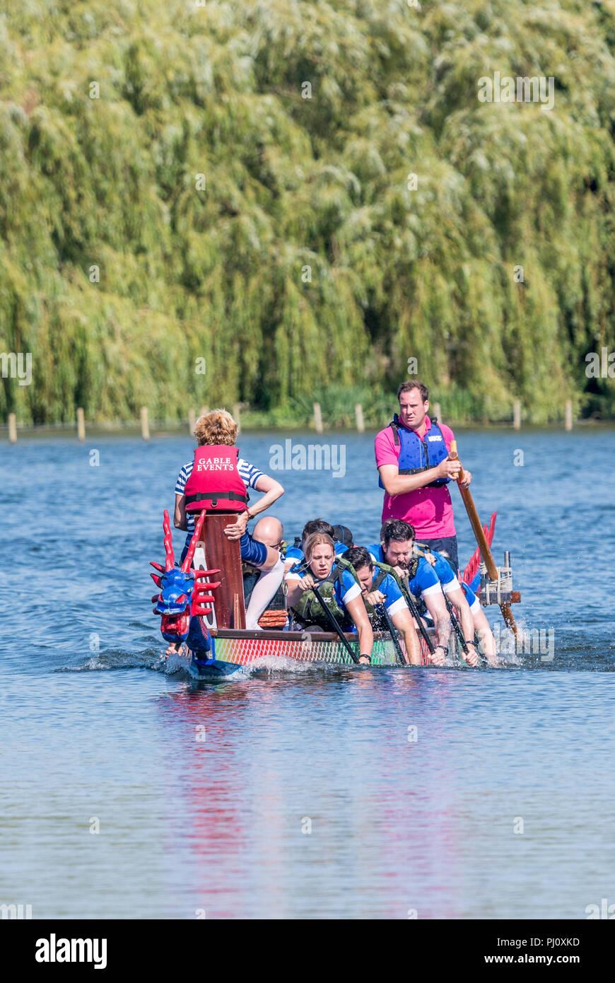 Scharf Crew im Dragon Boat Race von Osten Northants Rotary Clubs an Wicksteed Park, Kettering organisiert am 2. September 2018. Stockbild