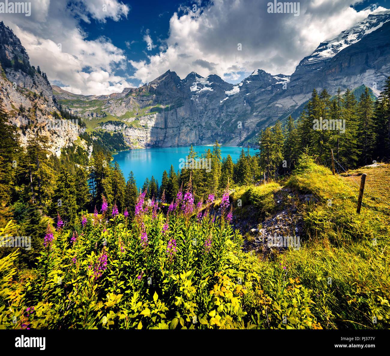 Bunte Sommermorgen auf einzigartigen See - Oeschinensee (Oeschinensee), UNESCO-Weltkulturerbe. Schweiz, Europa. Stockbild