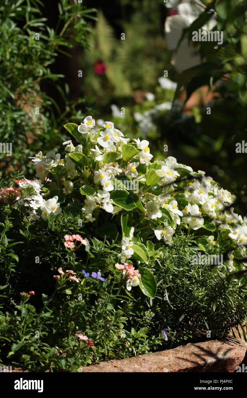 Beau Jardin Stockfotos & Beau Jardin Bilder - Alamy