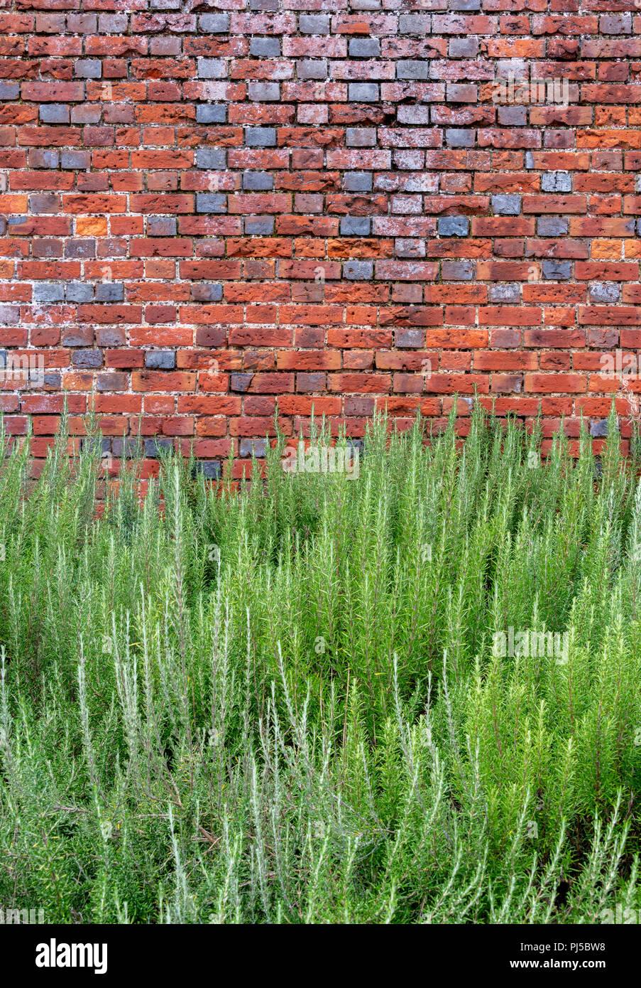 alte mauerpflanzen stockfotos & alte mauerpflanzen bilder - alamy