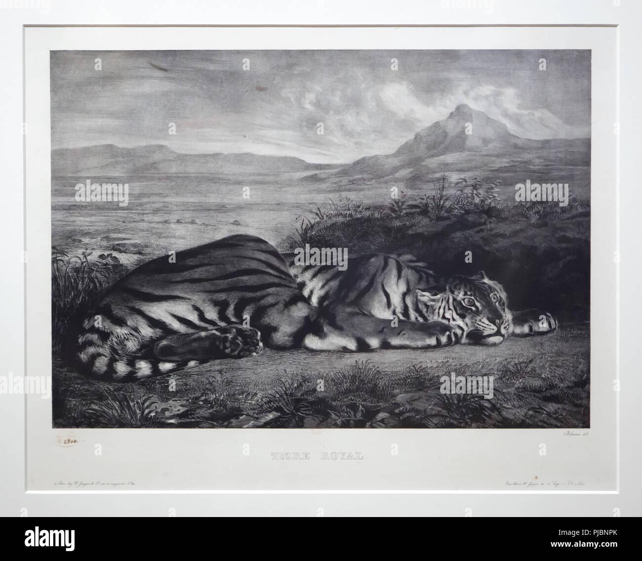 """Die Lithographie """"Royal Tiger' (1829-1830) des Französischen romantischen Künstler Eugène Delacroix angezeigt an seiner Retrospektive im Musée du Louvre in Paris, Frankreich. Die Ausstellung, die Meisterwerke der Führer der französischen Romantik läuft bis 23. Juli 2018. Stockbild"""