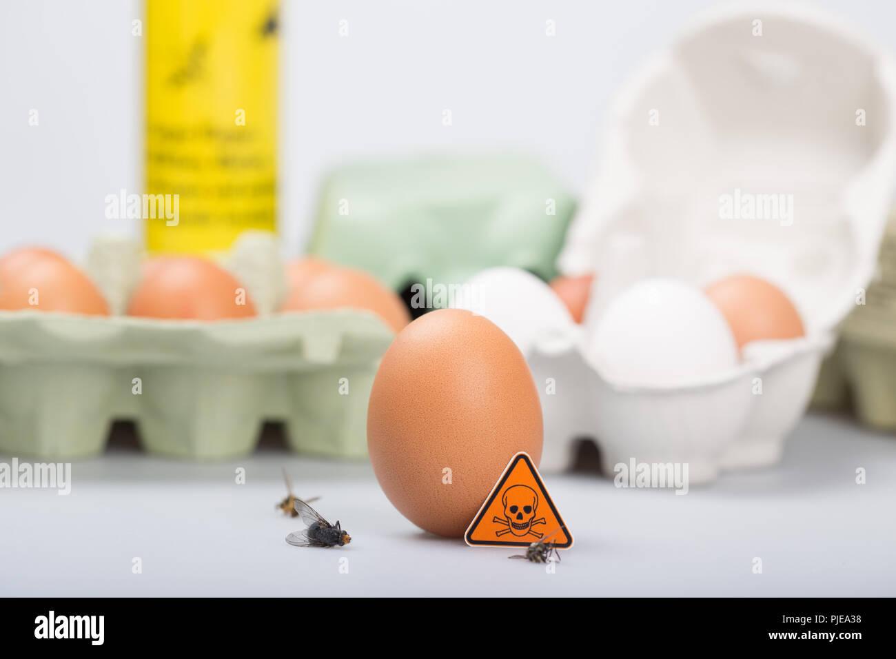 Fipronil belastete Eier Stockbild
