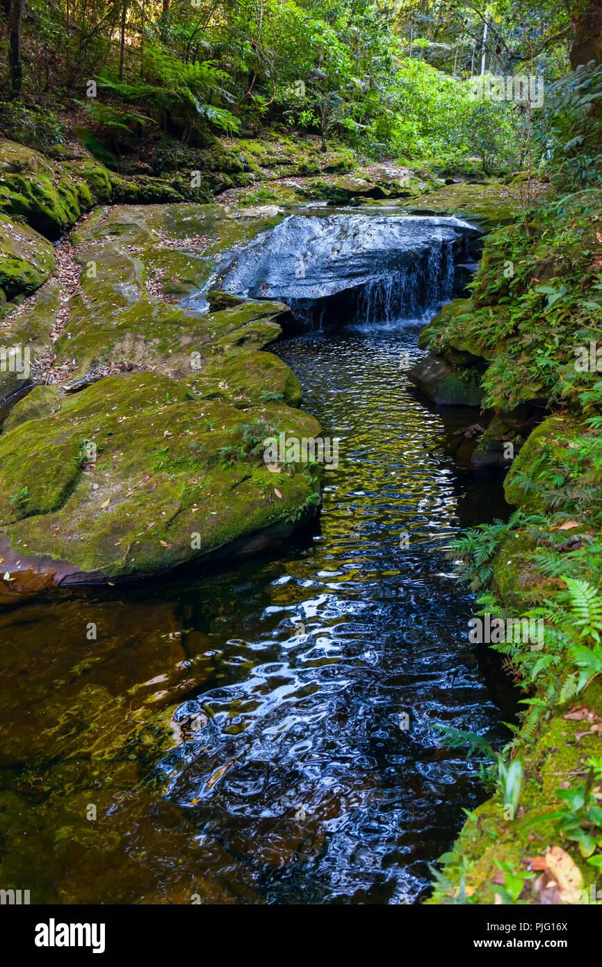 Creek mit kristallklarem Wasser mitten im Dschungel von Bolivien Stockbild