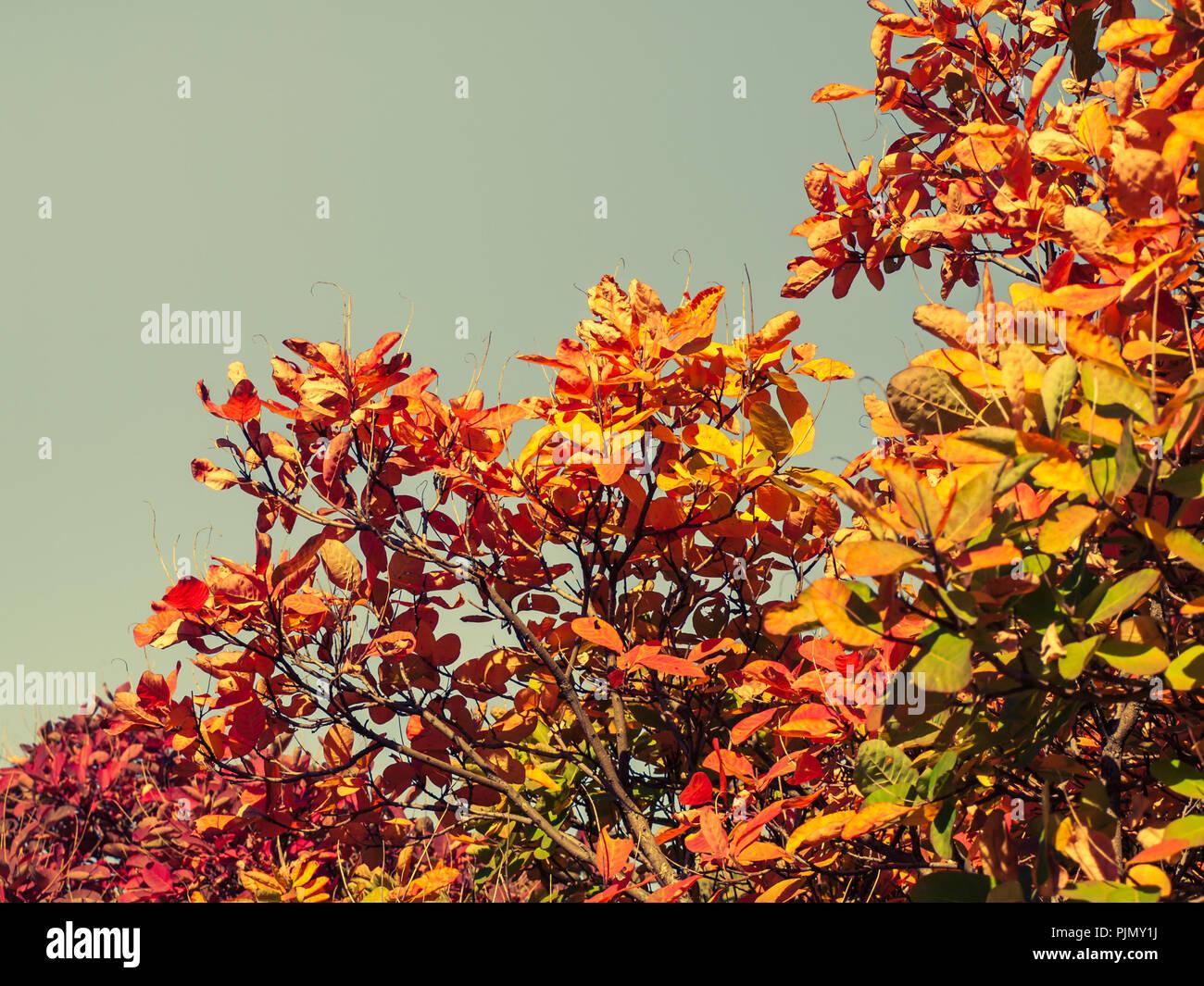 bäume und büsche mit roten und gelben blätter im wald im
