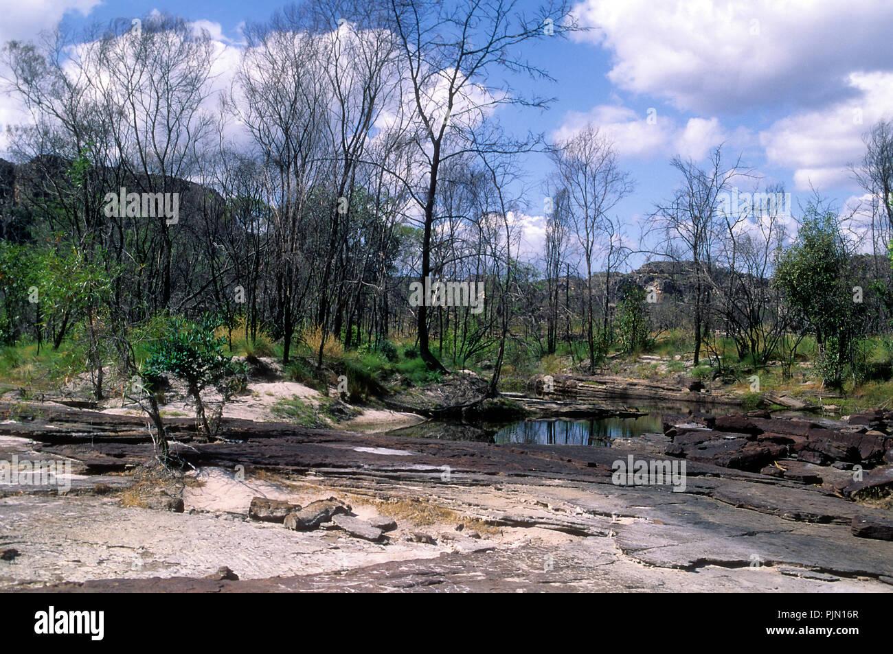 Einen kleinen Busch, der aus einem Felsen riss Stockfoto