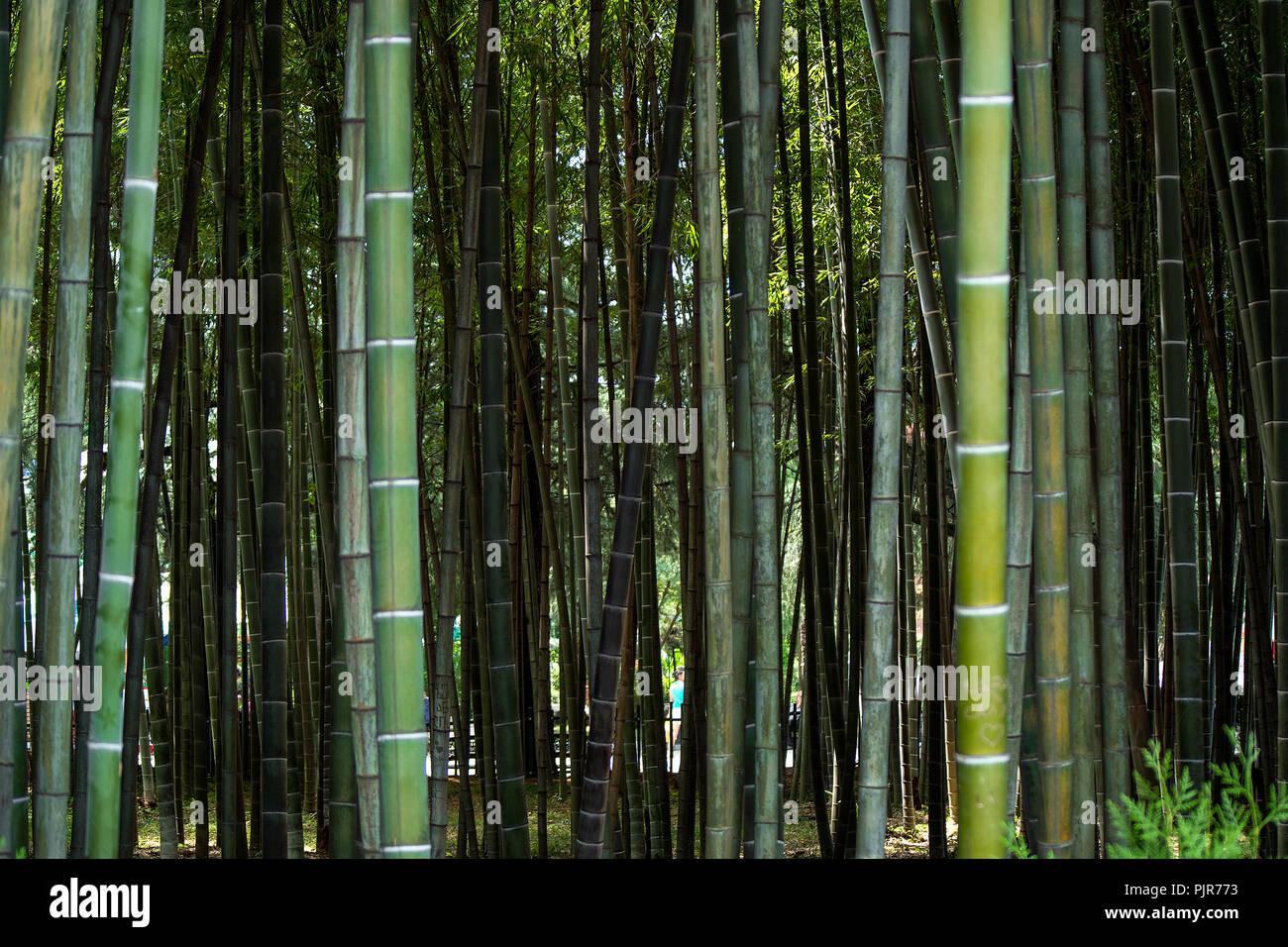 Tief In Einem Bambuswald Der Dicke Grune Bambus Amtsleitungen
