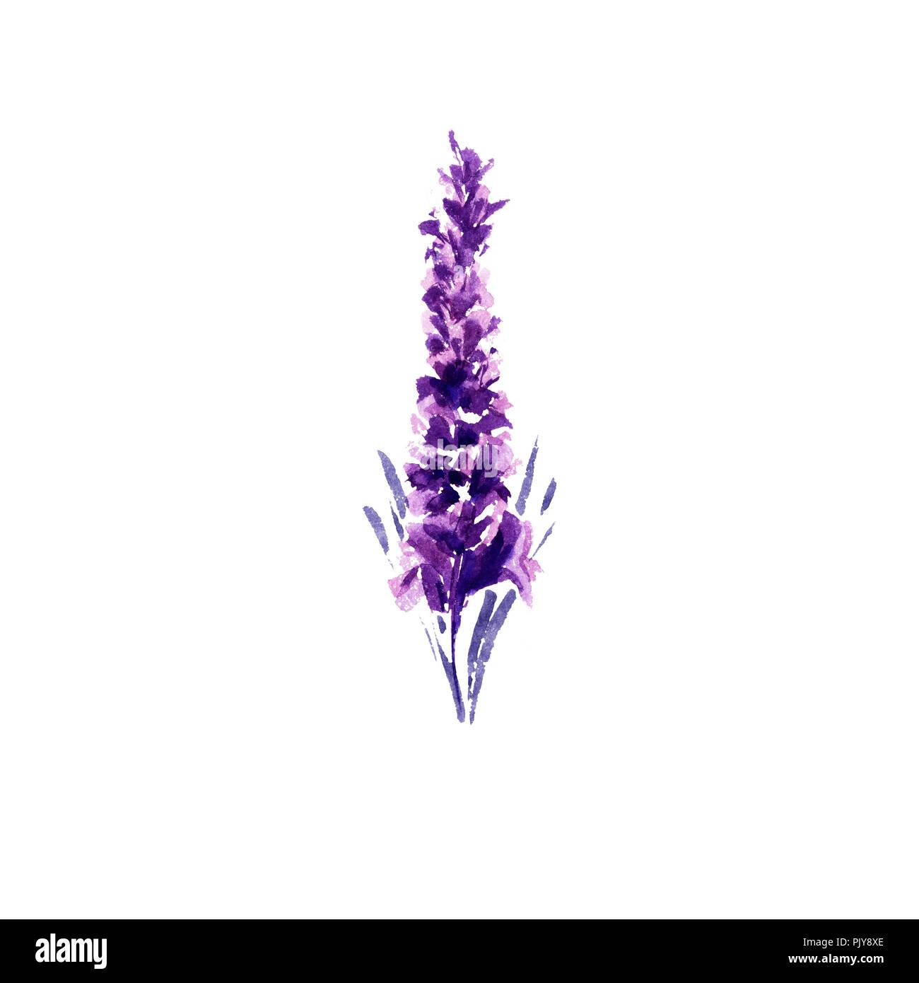 Lavendel Blume Aquarell Abbildung Single Lavendel Zweig Hochzeit