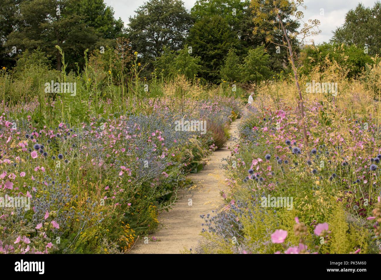 Merton Grenzen, Oxford Botanic Garden, wissenschaftlich entwickelt, visuell beeindruckende wildflower Anzeige. Ökologisch nachhaltige Pflanzen aus Samen gezogen. Stockbild