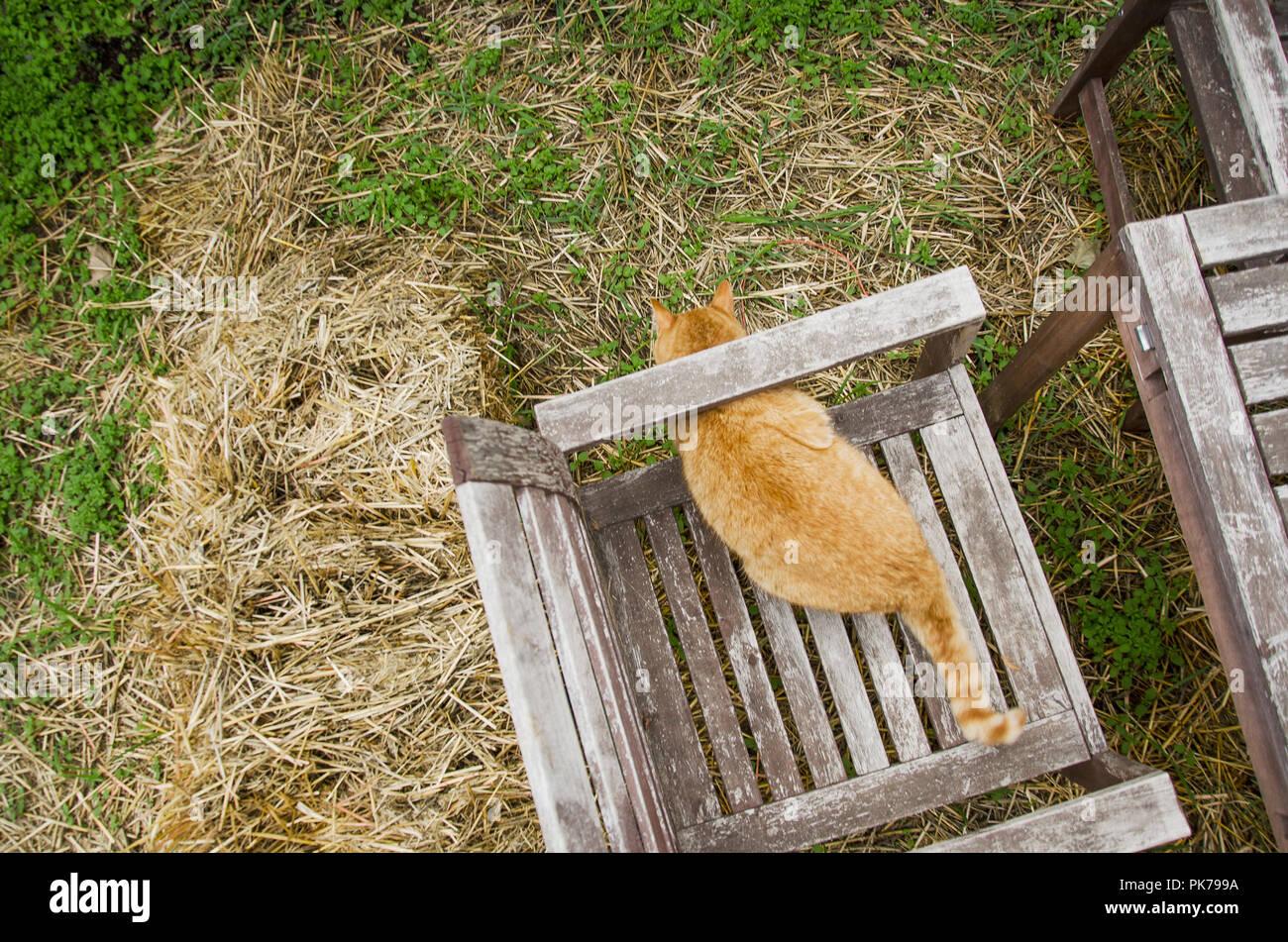 Eine Katze auf einem Stuhl außerhalb Stockbild