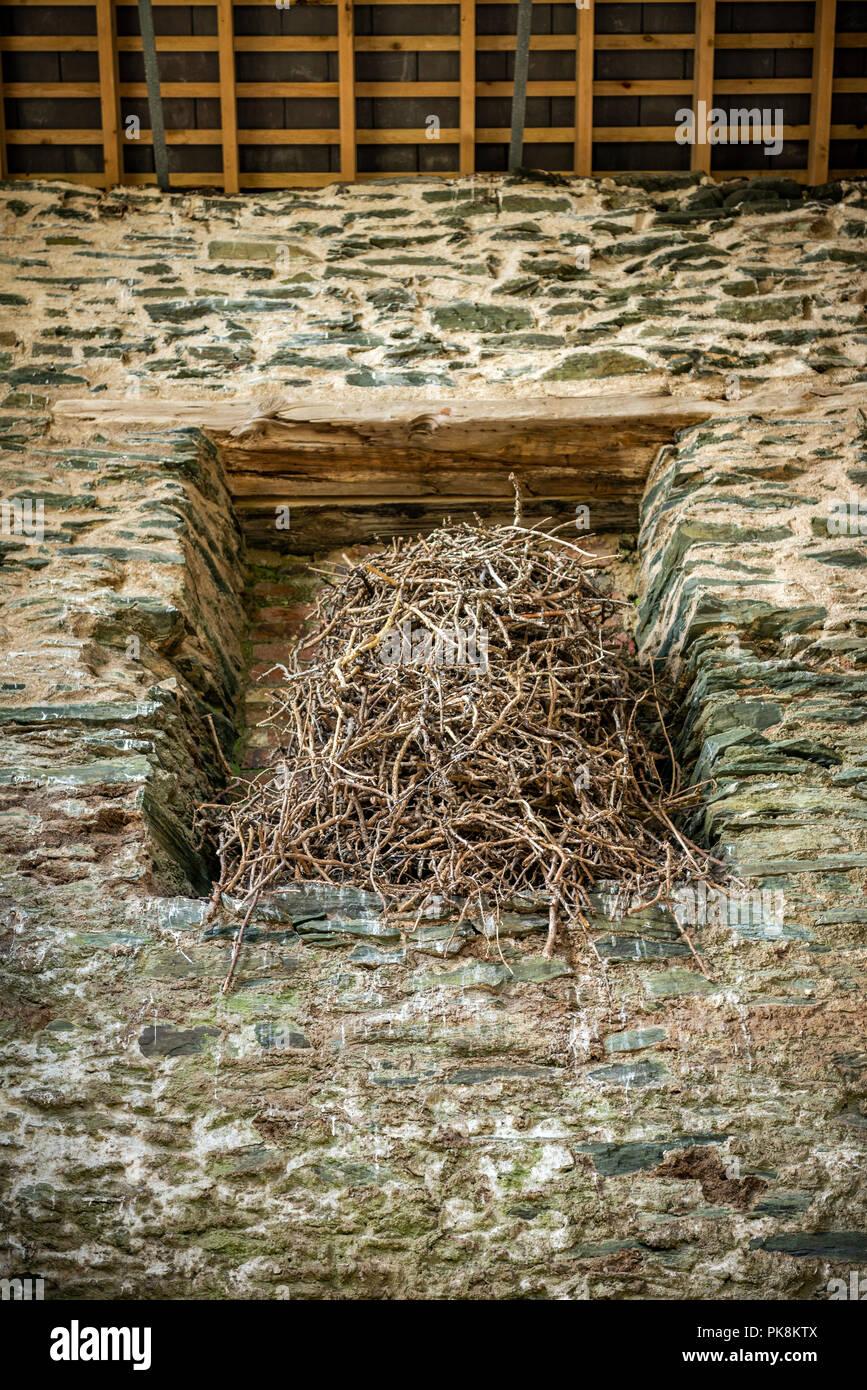 Eine massive Birds Nest in einem alten Pumpenhaus bei Parys Mountain Kupfermine auf Anglesey, Nordwales Stockbild
