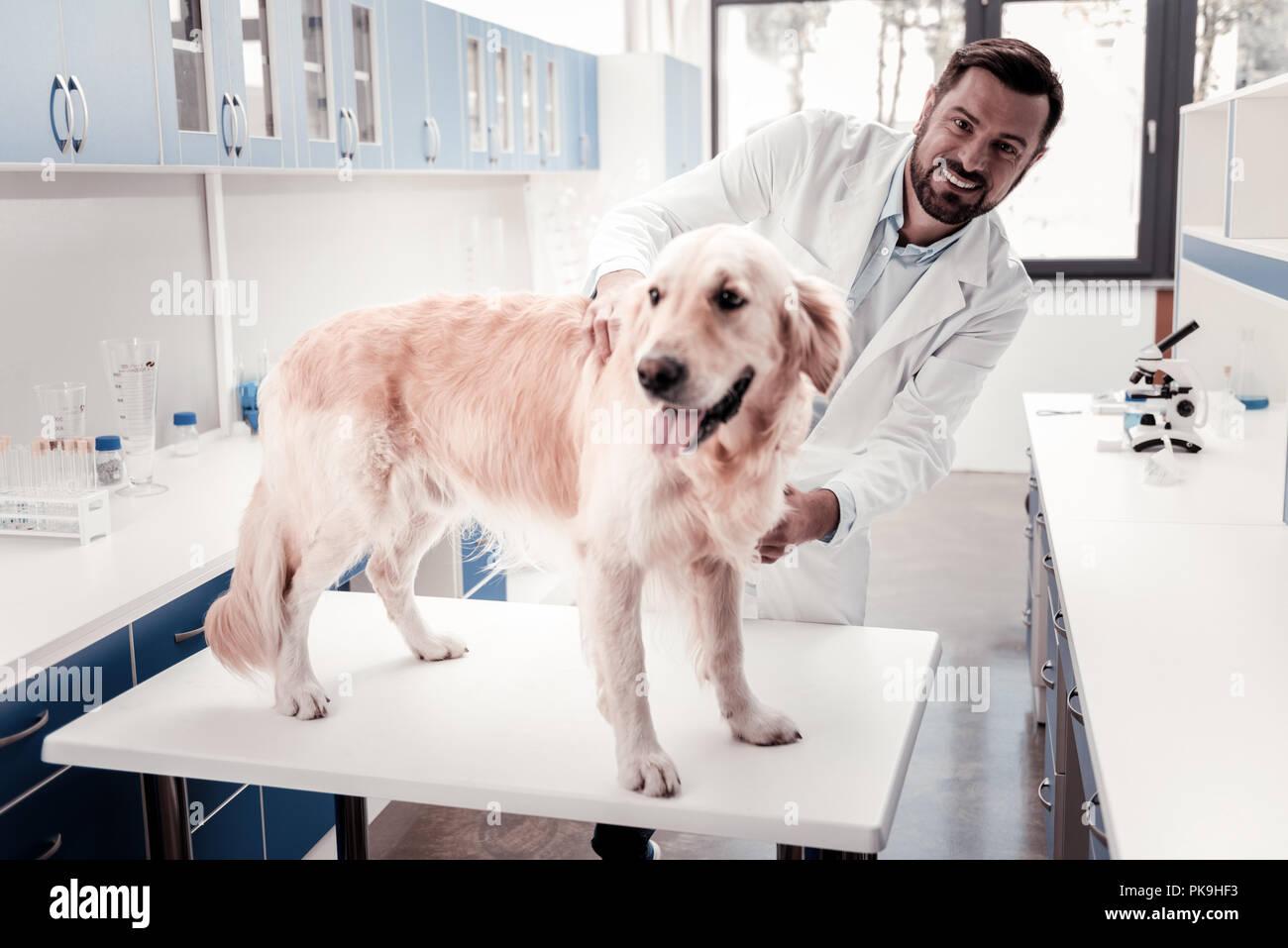 Lustig Hund besuchen seine bevorzugten tierärztlichen Stockbild