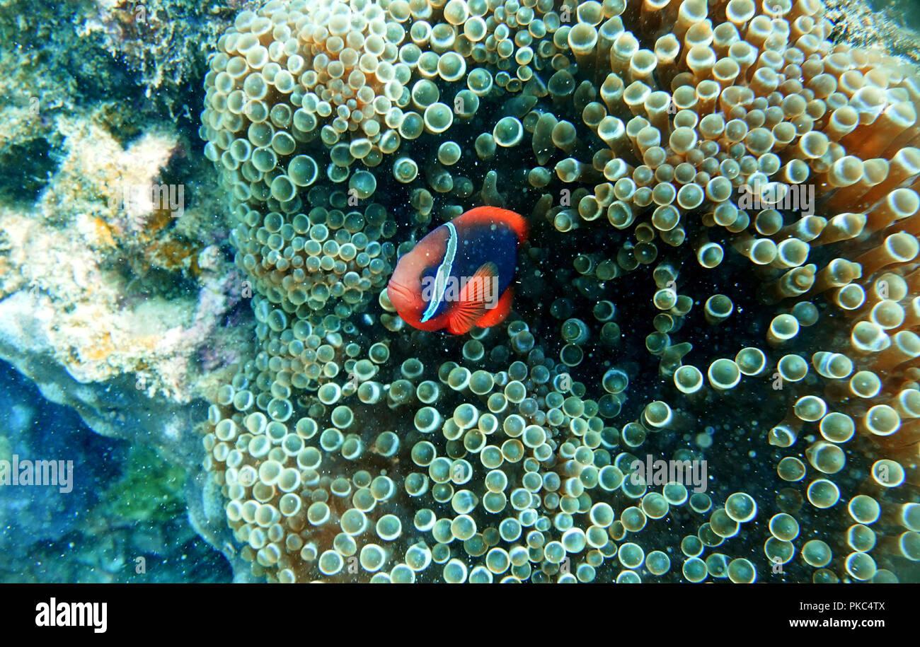 Viele Fische, die von der Insel des Menschen