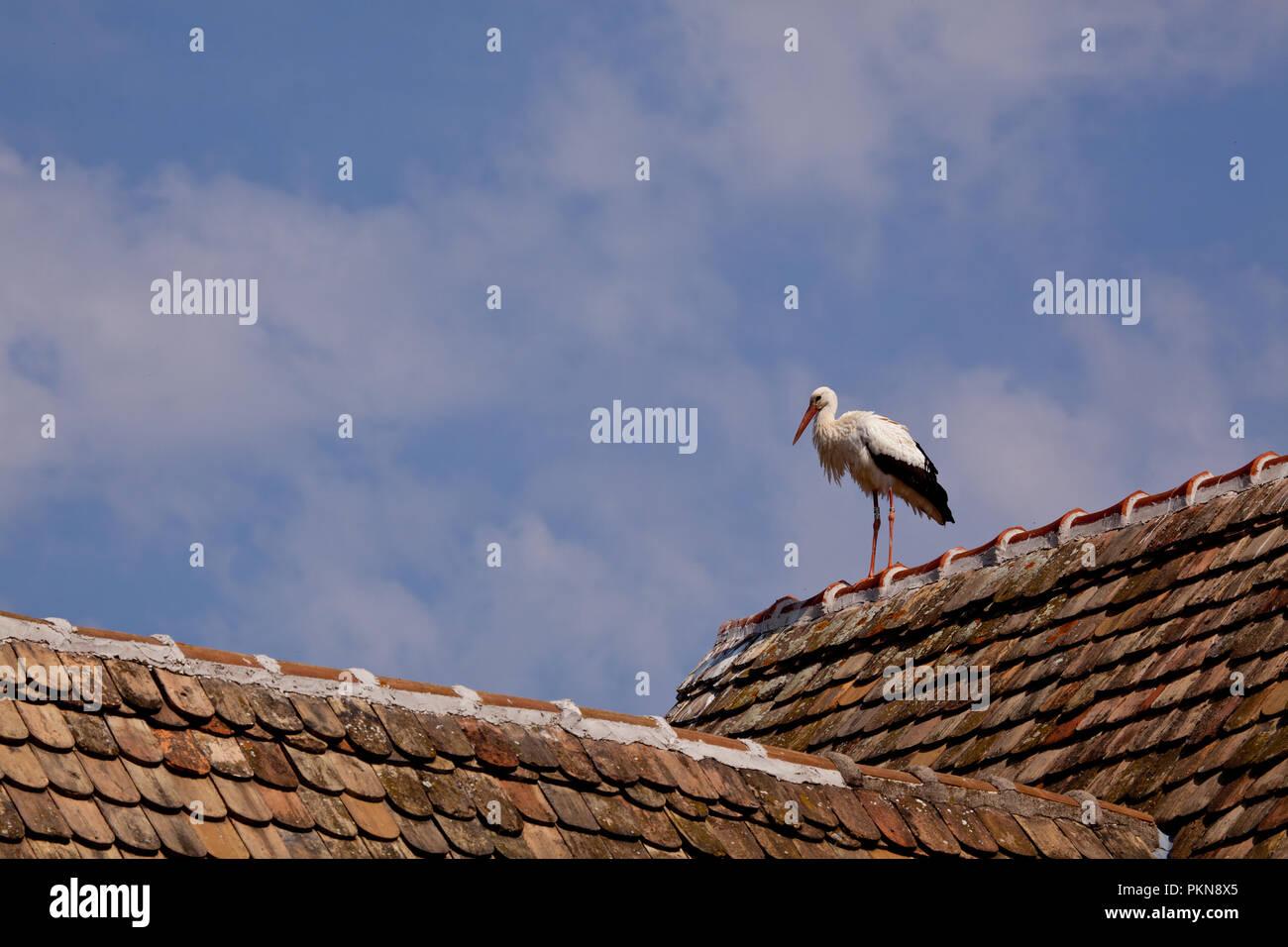 In fast jedem Haus im Ecomusee findet sich ein Storchennest Stockbild