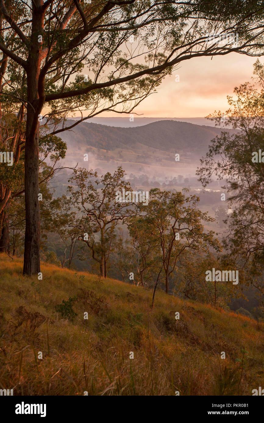 Sunrise mit goldenen Himmel und Nebel im Tal unter Wald am Tooloom Nationalpark, NSW Australien liegen. Stockbild