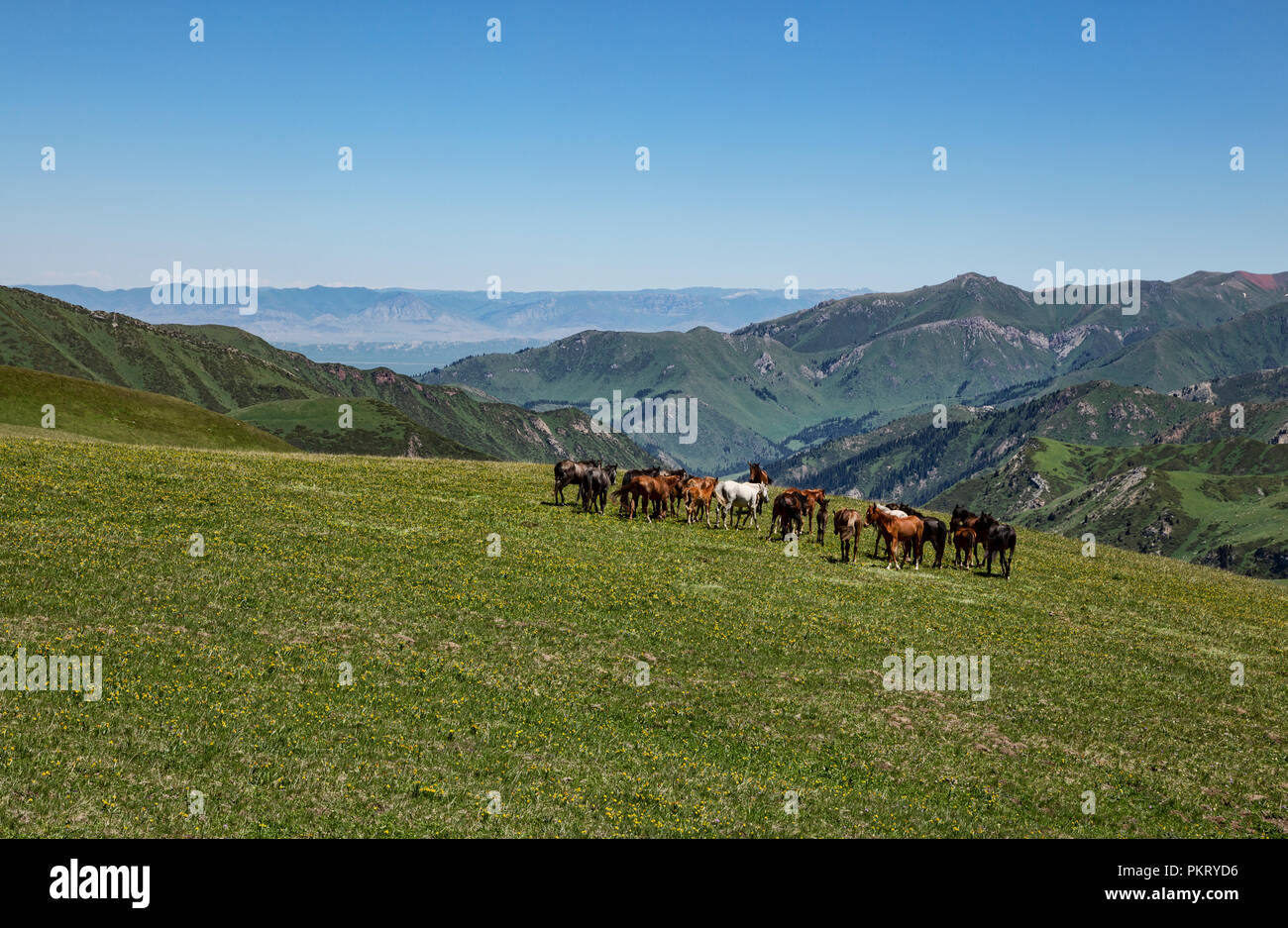 Semi-wild Kirgisischen Pferde grasen auf hochgelegenen Almen mit Uch Kashka Tal im Hintergrund, Keskenkyia Loop trek, Jyrgalan, Kirgisistan Stockbild