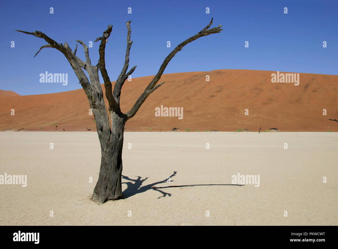 Ansicht der Namib Wüste bei Sossusvlei, ein Salz und Lehm von hohen roten Sanddünen, im südlichen Teil der Namib Wüste umgeben Pan. Stockfoto