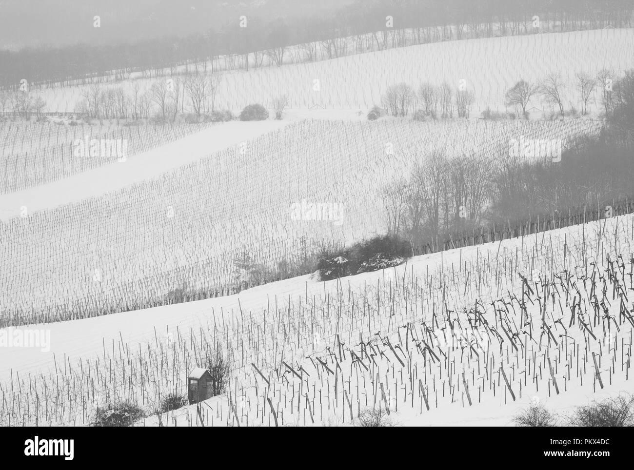 Schneebedeckte Weingärten ein grauem Wintertag (Wien, Kahlenberg) Stockbild