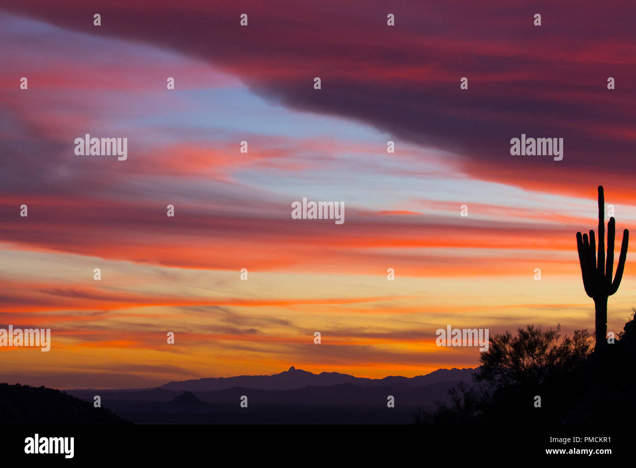 Sagauro Kaktus gegen Sonnenuntergang Himmel. Arizona. Stockfoto