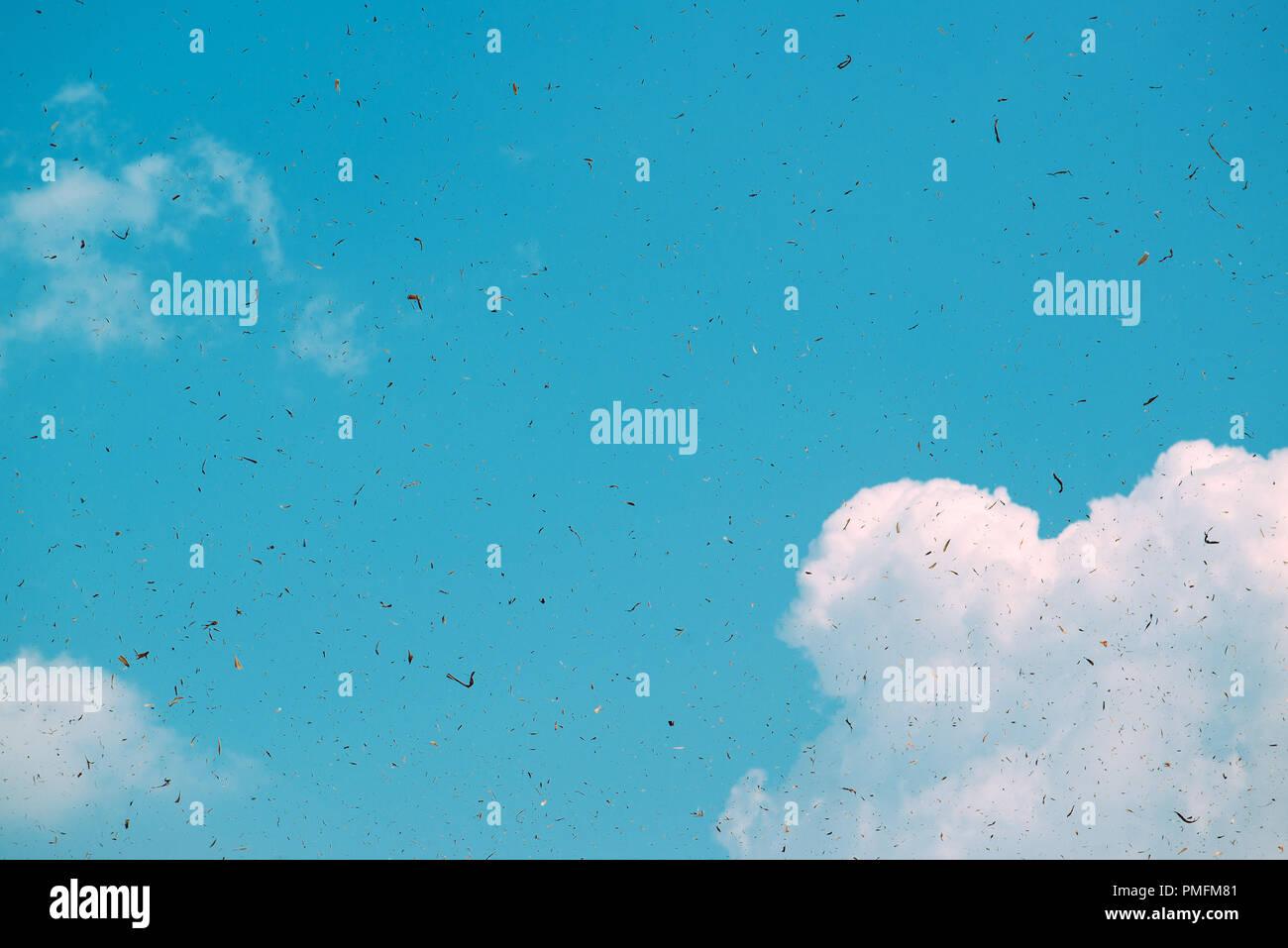 Staub- und Schmutzpartikel in der Luft, als Grunge Hintergrund Stockbild