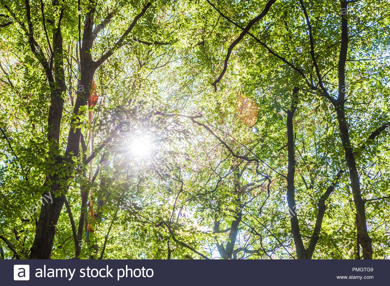 Kletterausrüstung Forst : Bäume am hambacher forst wald in der nähe von düren deutschland