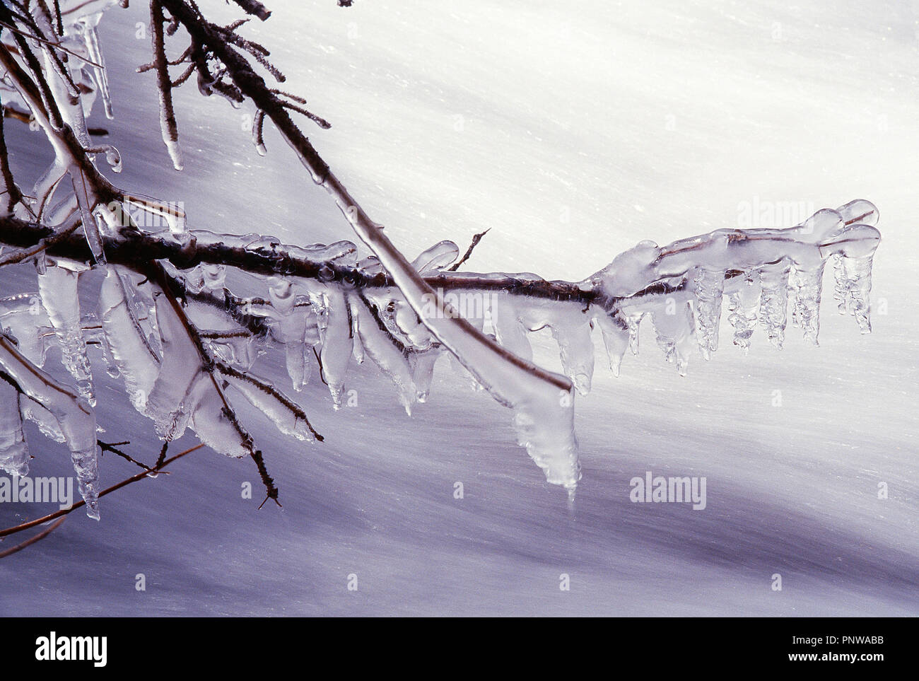 USA. Wyoming. Der Yellowstone National Park im Winter. Eis bedeckt Baumstrukturzweig. Stockbild