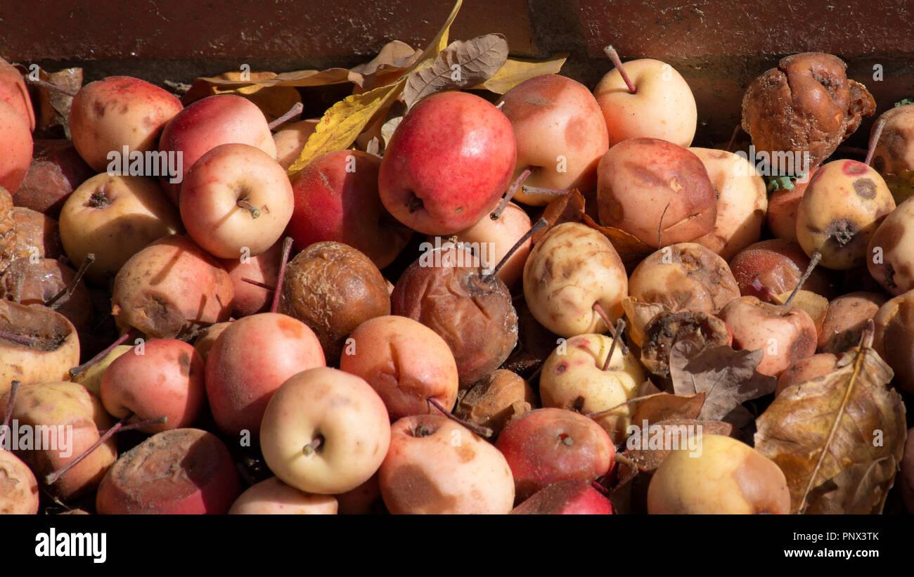 Herbst Apple fallen Stockbild