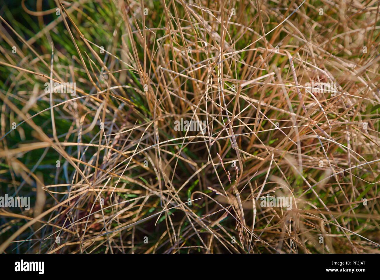 Trockenes Gras Nahaufnahme Stockbild