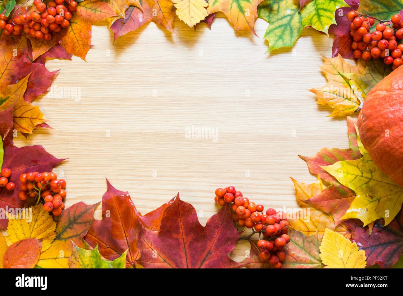 Grenze der Blätter im Herbst, Kürbis und vogelbeere auf Holzbrett. Kopieren Sie Platz. Fallen. Stockfoto