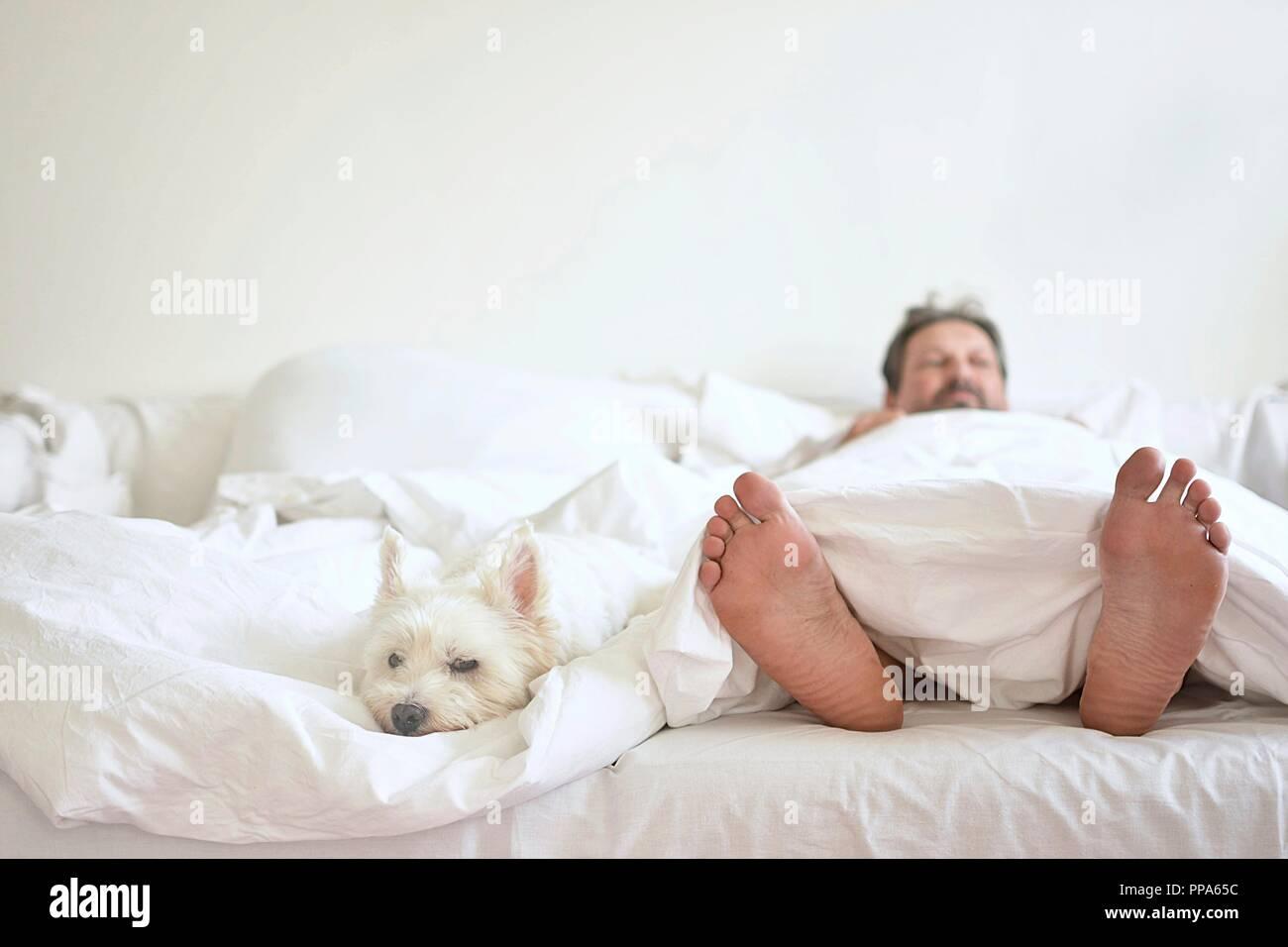 Home Comfort weißen Hund im Schlafzimmer Stockfoto, Bild: 220271224 ...
