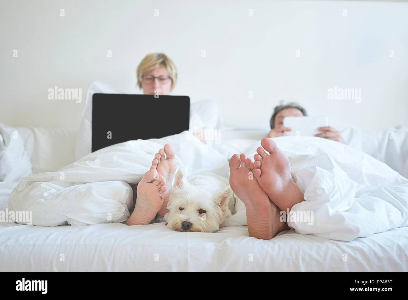 Home Comfort weißen Hund im Schlafzimmer Stockfoto, Bild ...