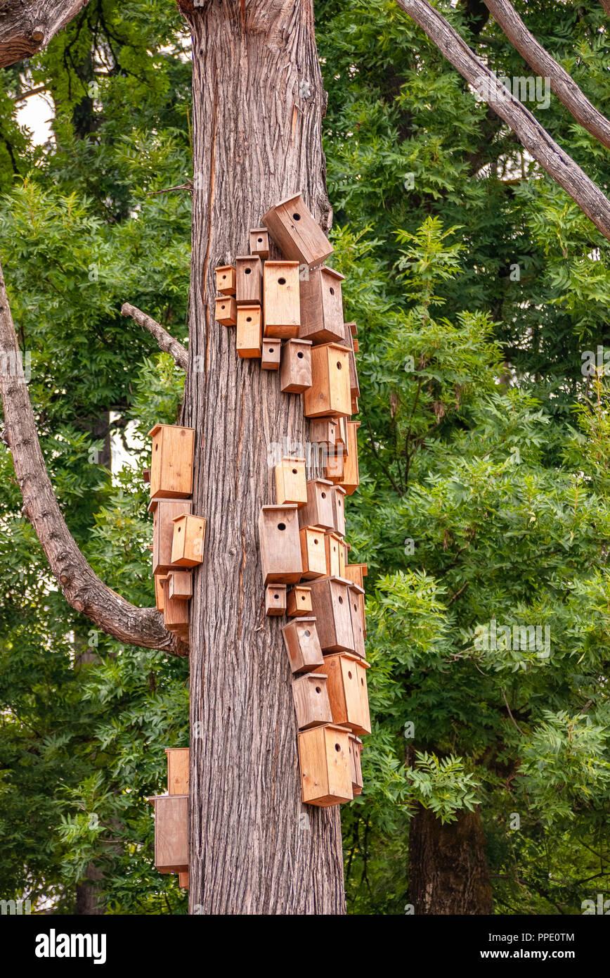Nistkästen auf Zeder Körper überfüllt. Stadt birdhouses auf Zeder Schaft Stockbild