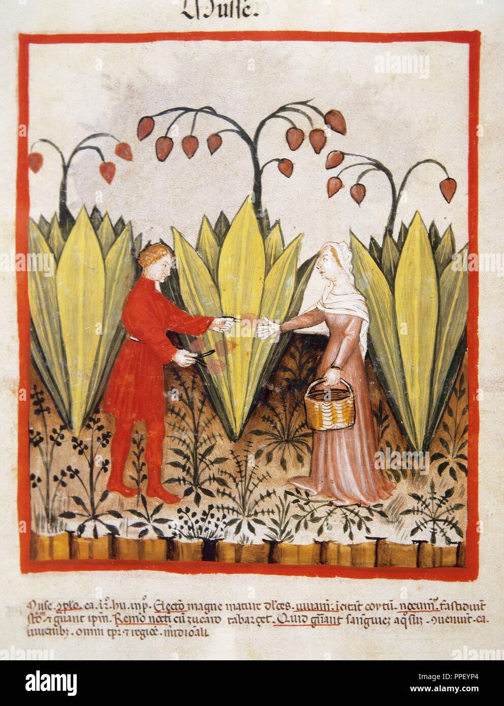 Die im Mittelalter datiert Kuscheldatierung