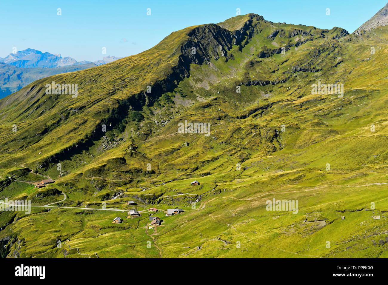 Alp Bachläger, Grindelwald, Berner Oberland, Schweiz Stockbild