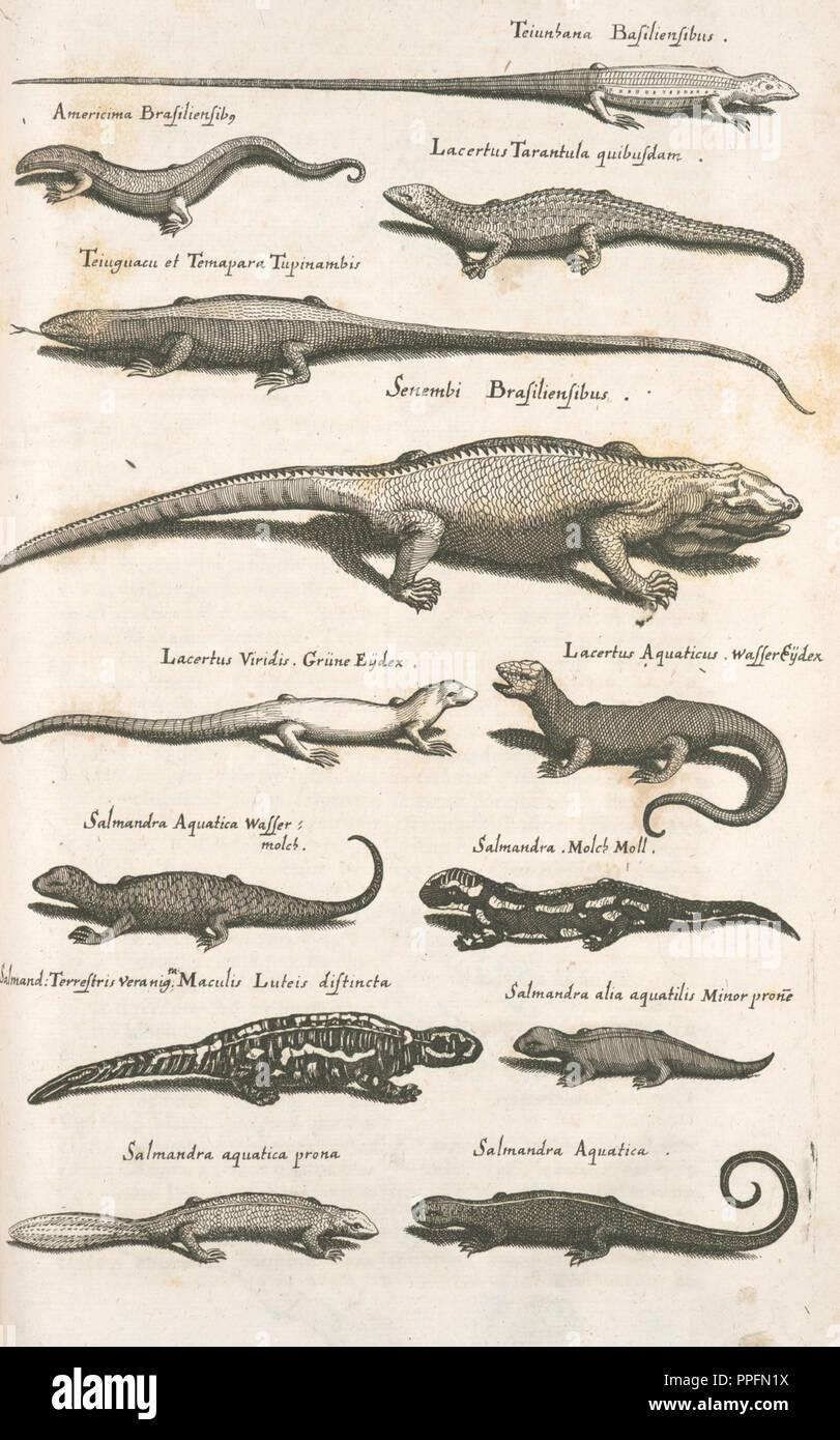 Verschiedene Arten reptillian Abbildung Stockbild
