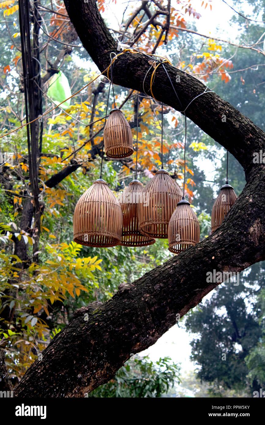 Bambus Laternen Hangen Von Einem Baum In Der Altstadt Von Hanoi