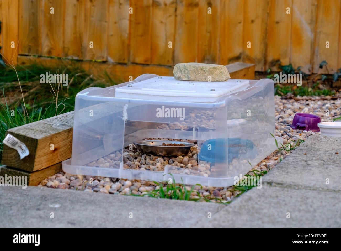 Ein Garten Igel Beschickungsstation Stockfoto Bild 220650165 Alamy