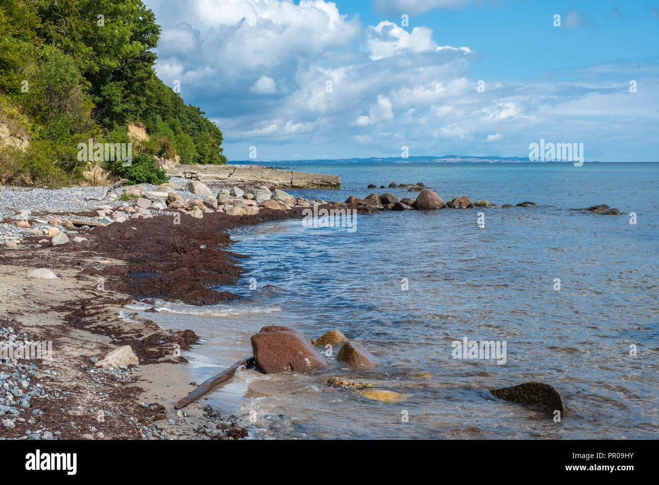 Strand von fanefjord Skov an der südwestlichen Seite der Insel Moen, Dänemark, Skandinavien, Europa. Stockbild